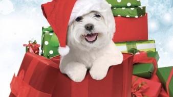 El milagro de Navidad de mi perro