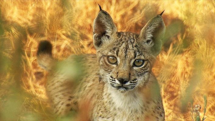 Wilmed, el último bosque mediterráneo