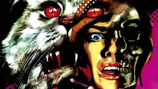 Siete muertos en el ojo del gato