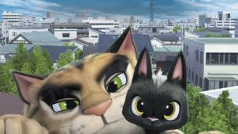 Gatos, un viaje de vuelta a casa