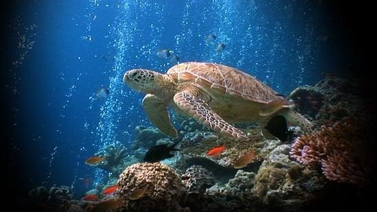 El mar de la vida