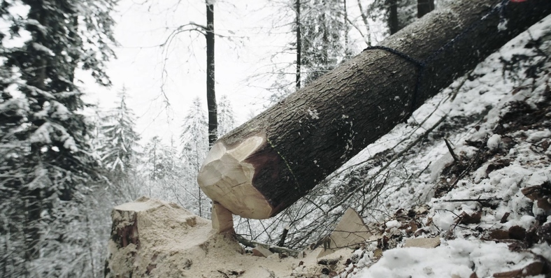 Ins Holz