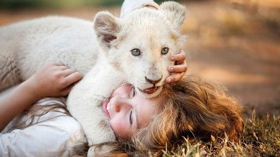 La Mia i el lleón blanc