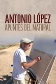 Antonio López. Apuntes al natural