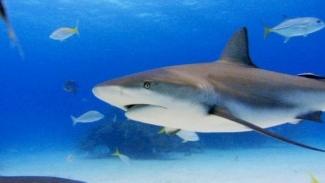 Tiburón, en las garras del hombre